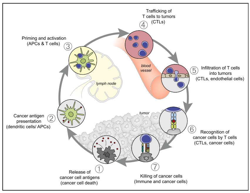 Cancer-Immunity Cycle