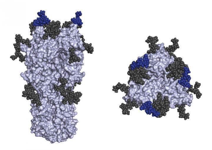 Image comparing influenza vaccine antigens