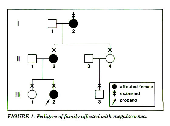 FIGURE 1: Pedigree of family affected with megalocorriea.