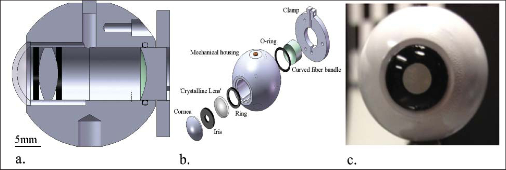 (A) Cross-sectional view of the optomechanical eye model. (B) Exploded view with the individual parts listed. (C) The assembled optomechanical eye model that is comparable to a life-size human eye.