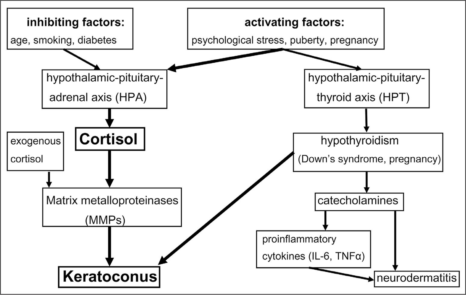 Hypothetical scheme for the possible influence of increased cortisol levels on keratoconus.