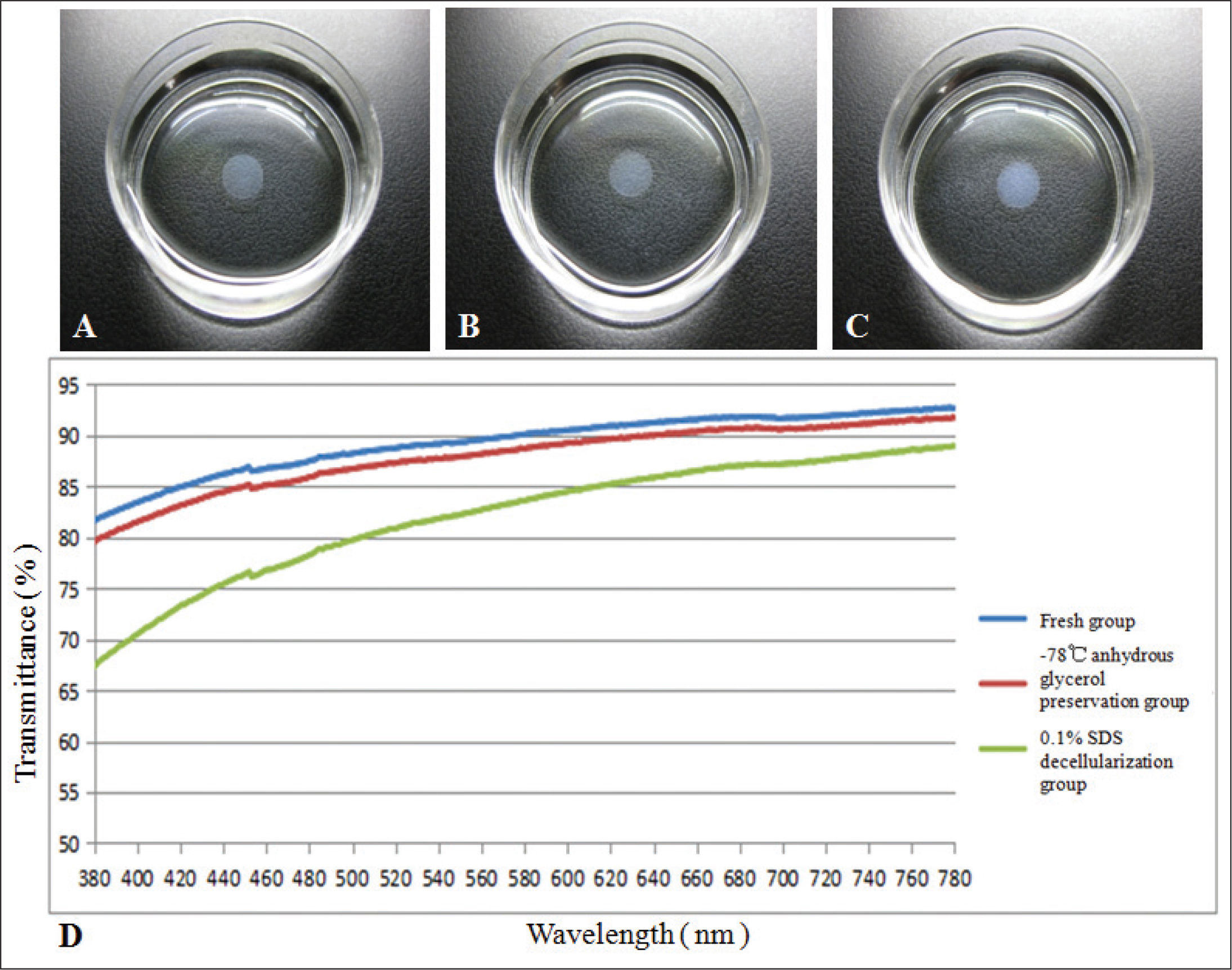 Transparency and transmittance of corneal stromal lenticules. The lenticules of the (A) fresh and (B) −78 °C anhydrous glycerol preservation group were transparent, and the lenticules in the (C) sodium dodecyl sulfate (SDS) group were turbid and edematous. The transmittance in the 380- to 780-nm spectrum of central lenticules was highest in the fresh group, slightly lower in the glycerol group, and lowest in the (D) 0.1% SDS group.