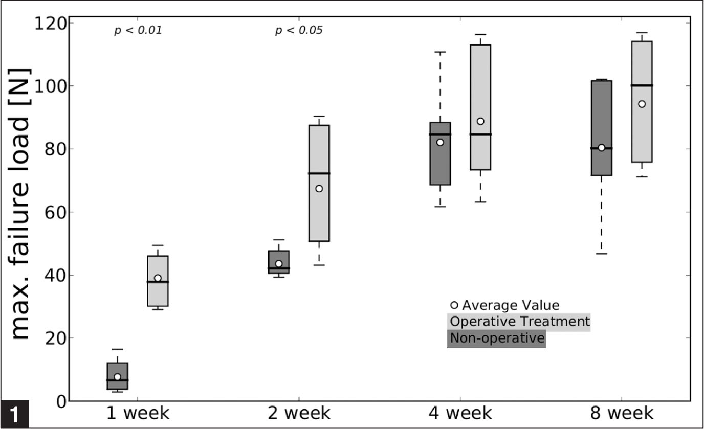 Effect of operative vs nonoperative treatment on the maximum (max) failure load of rat Achilles tendon over time after transection. The boxes extend from the lower to the upper quartile values of the data, with a line at the median. The whiskers extending from the box show the range, and the circles assign average values of the data set. Upper X-axis tick labels indicate minimal statistical significance (P values) for diverseness of the cohorts.