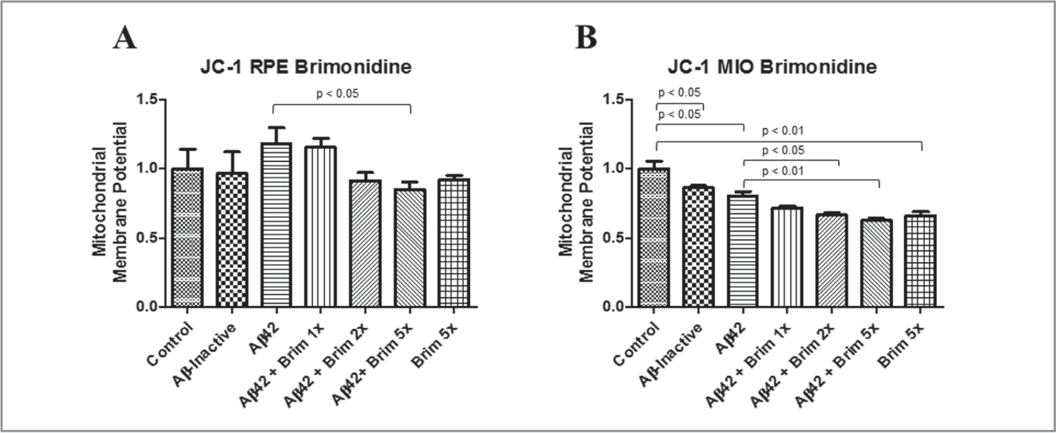 Mitochondrial membrane potential assay (JC-1 Assay). (A) Adult human retinal pigment epithelial (RPE) cells after pretreatment with 1×, 2×, and 5× concentrations of brimonidine and exposure to amyloid-beta 1–42 (Aβ42) 10μM. (B) Müller (MIO) cells after pretreatment with 1×, 2×, and 5× concentrations of brimonidine and exposure to Aβ42 10μM. Data are normalized to set control (untreated) samples at 100% of signal for comparison.
