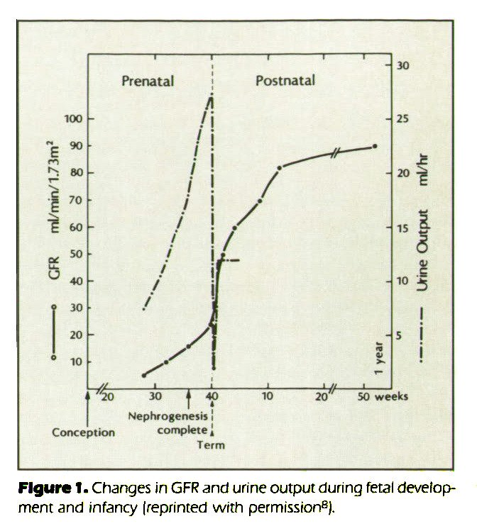 Figure 1. Changes in GFR and urine output during fetal development and infancy (reprinted with permission8).