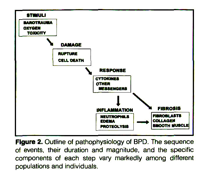 Figure 2. Outline of pathophysiology of BPD. The sequence of events, their duration and magnitude, and the specific components of each step vary markedly among different populations and individuals.