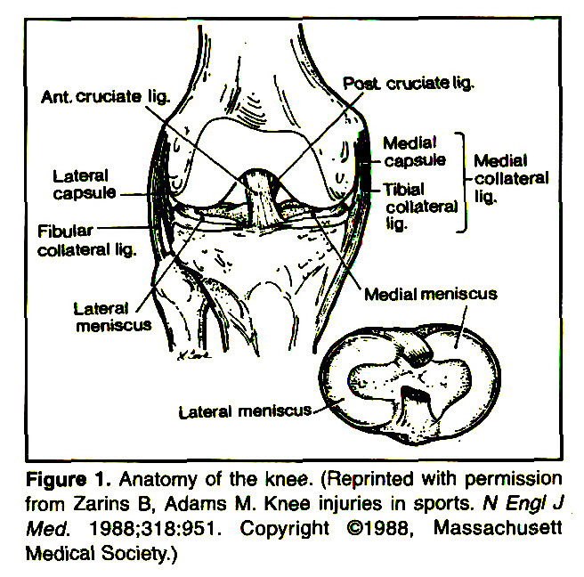 Figure 1 . Anatomy of the knee. (Reprinted with permission from Zarins B, Adams M. Knee injuries in sports. N Engl J Med. 1988:318:951. Copyright ©1968, Massachusett Medical Society.)