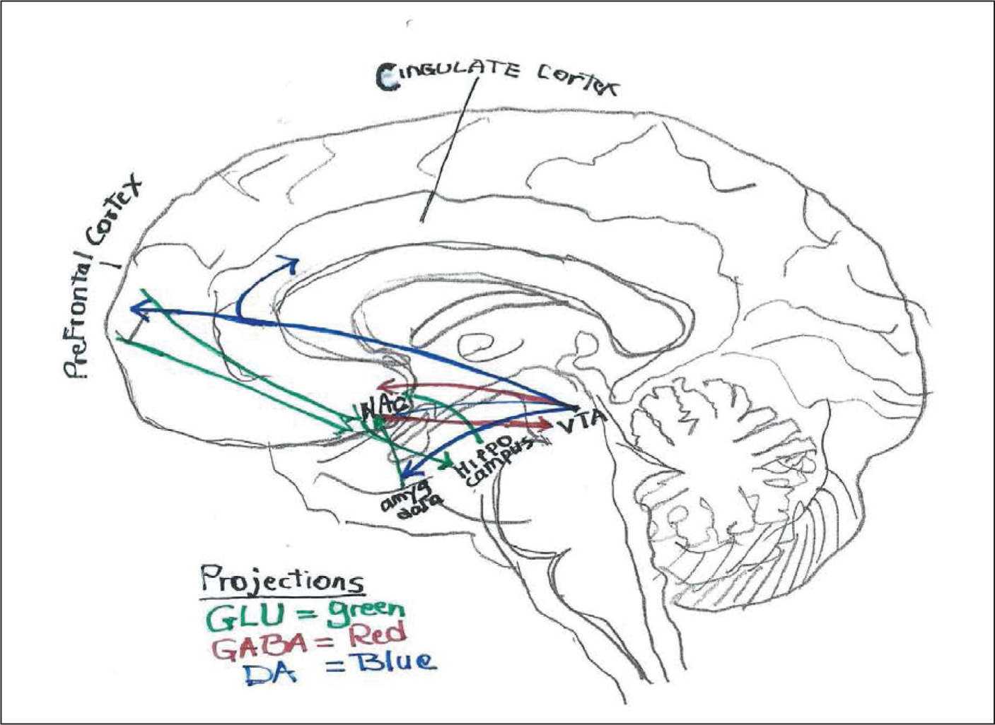 Placebos activate the brain's reward circuitry.Figure courtesy of Devdutt Nayak, MD.