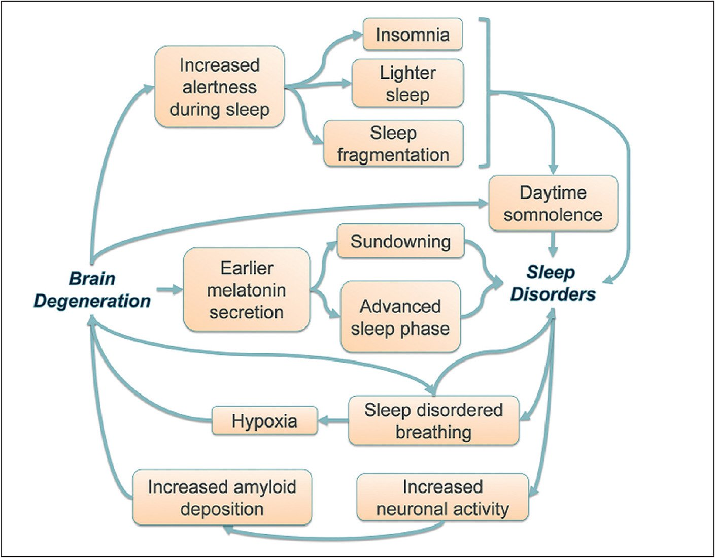 """Bidirectional pathways between neurodegeneration and sleep disorders. Starting from neurodegeneration, one pathway reflects attenuated range of brain activity across the sleep-wake cycle, translating as insomnia, sleep fragmentation, and daytime somnolence. A second pathway leads to sleep phase disorder and contributes to sleep fragmentation and """"sundowning."""" Obversely, sleep disorders can lead to neurodegeneration through prolonged neuronal activation, as promoted by sleep deprivation and decreased slow wave sleep. Finally, pathways intersect when it comes to sleep-disordered breathing, with bidirectional causal relationships between disrupted sleep and neurodegeneration."""