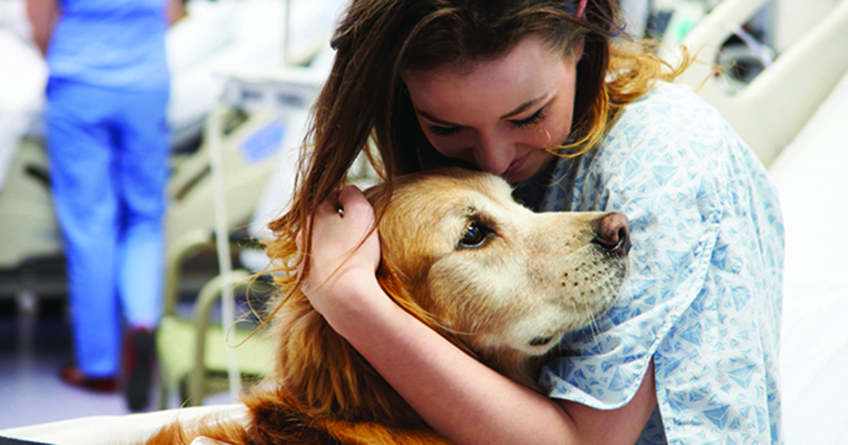 hospital therapy dog